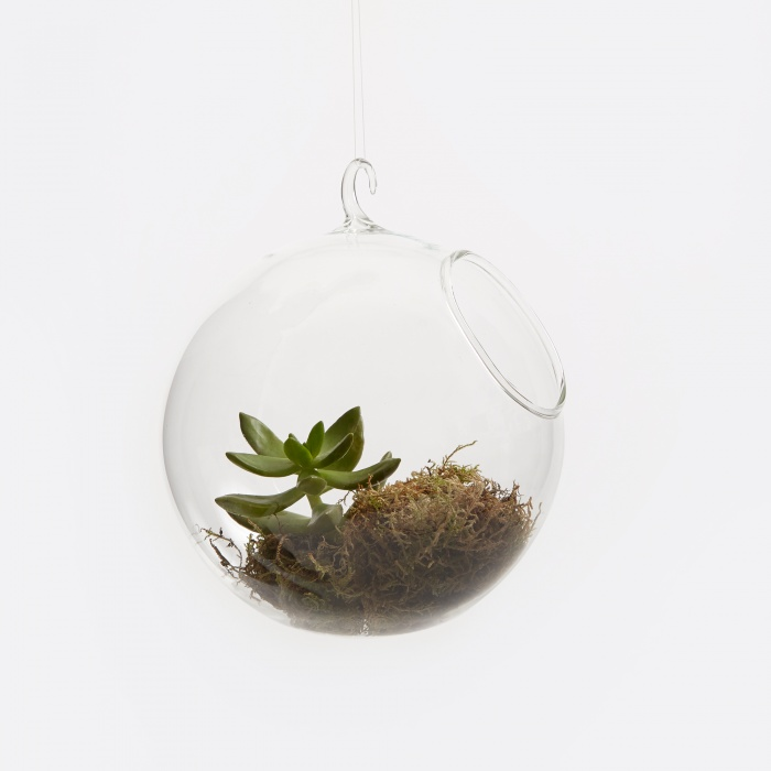 Chive Hanging Sphere - Clear (Image 1)