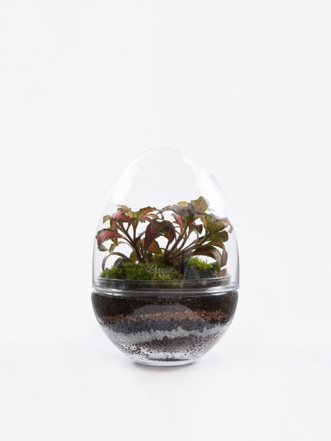 Jurassic Lab Terrarium - Medium